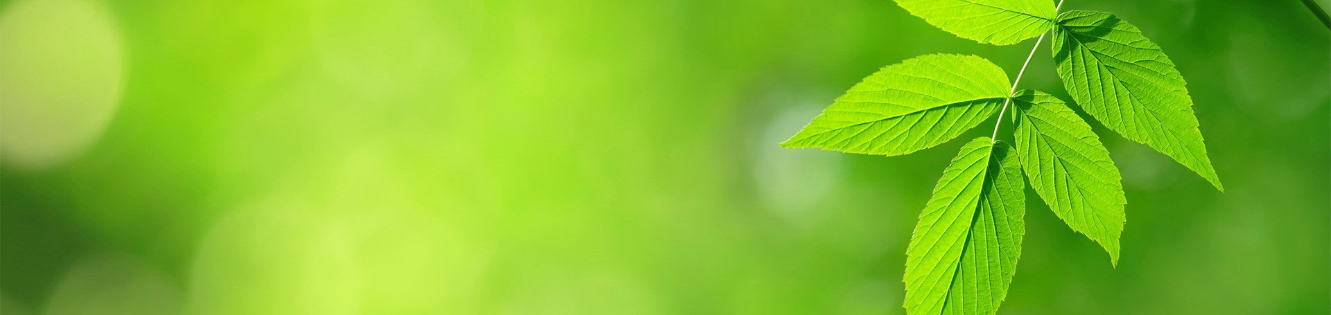 VP_VP_ALL_1920x455_1805_Leaf_Nature_Green.jpg